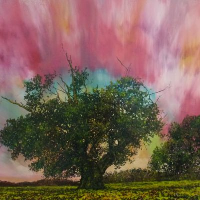 Oak with pink sky